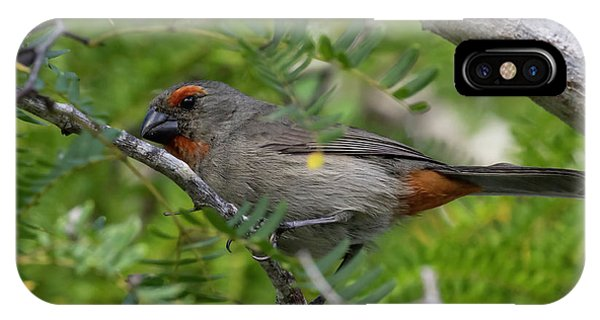 IPhone Case featuring the photograph Greater Antillean Bullfinch by Thomas Kallmeyer