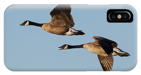 Canada Goose iPhone Case - Greater Canada Geese Pair Flying by Ken Archer