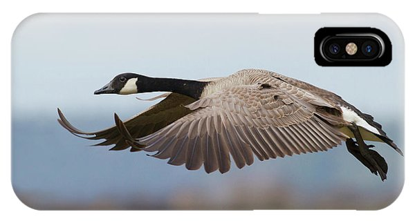 Canada Goose iPhone Case - Greater Canada Goose Alighting by Ken Archer