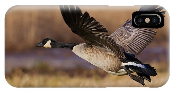 Canada Goose iPhone Case - Greater Canada Goose Taking by Ken Archer
