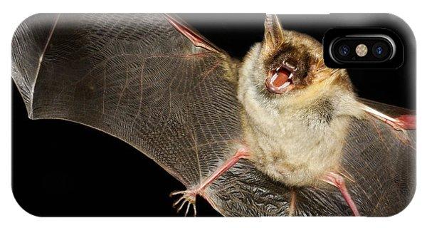 Bat iPhone X Case - Greater Mouse-eared Bat,  Myotis Myoti by Geza Farkas