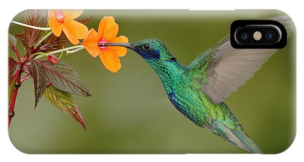 Central America iPhone Case - Green And Blue Hummingbird Sparkling by Ondrej Prosicky