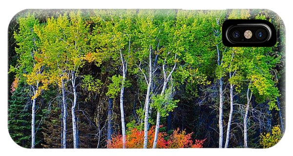 Green Aspens Red Bushes IPhone Case