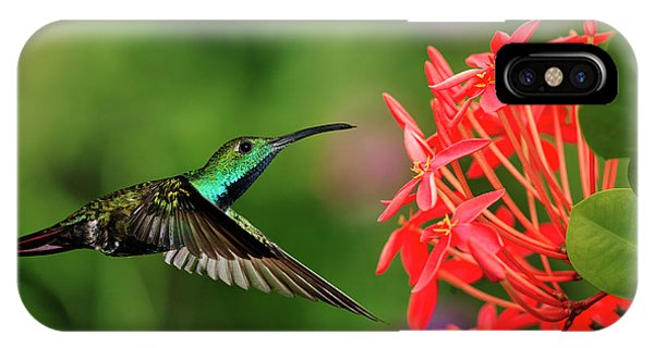 Green-breasted Mango Hummingbird, Costa Phone Case by Adam Jones