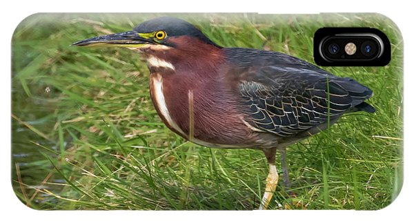 IPhone Case featuring the photograph Green Heron Up Close by Ricky L Jones