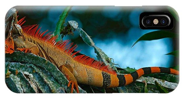 Claws iPhone Case - Green Iguana, Iguana Iguana, Portrait by Ondrej Prosicky