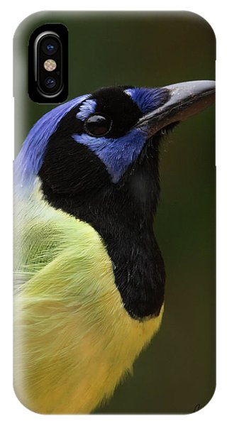 Green Jay Portrait IPhone Case
