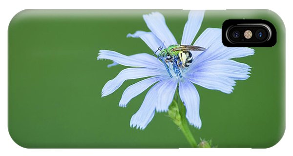 Green Metallic Bee On Blue Chicory Flower IPhone Case