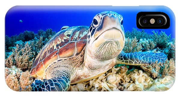 Aquatic iPhone Case - Green Turtle On The Sea Bed by Richard Whitcombe