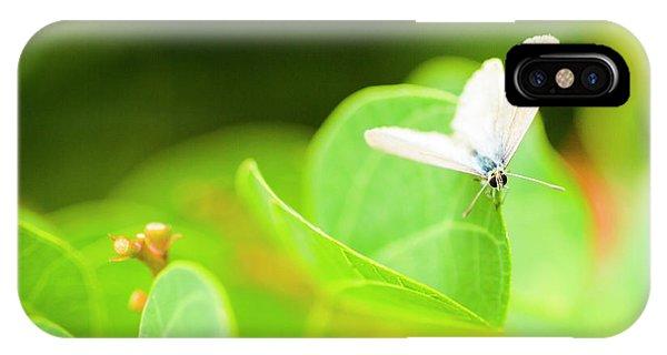Moth iPhone Case - Green Wilderness by Jorgo Photography - Wall Art Gallery