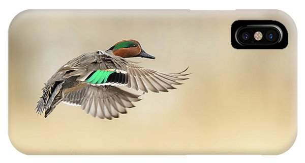 Teal Swan iPhone Case - Green-winged Teal by CR Courson