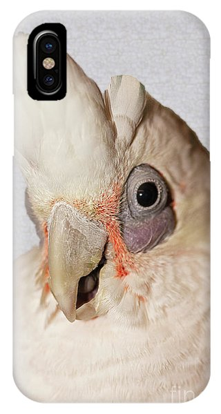 Gremlin IPhone Case
