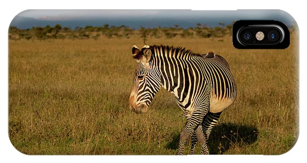 Grevy's Zebra IPhone Case