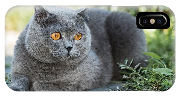 Grey Background iPhone Case - Grey British Cat Lying In The Green by Anton Papulov