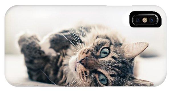 Cute Kitten iPhone Case - Grey Cat Lying On Bed by Valeri Potapova