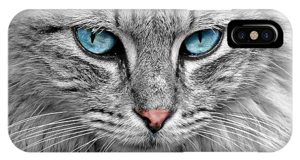 Grey Cat With Blue Eyes IPhone Case