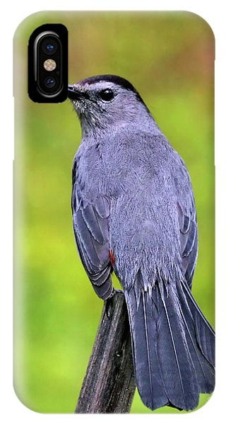 Grey Catbird IPhone Case