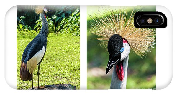 Grey Crowned Crane Gulf Shores Al Collage 8 Diptych IPhone Case