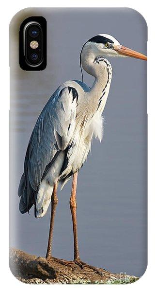 Grey Heron  Ardea Cinerea  South Africa Phone Case by Johan Swanepoel