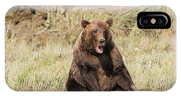 Bear Creek iPhone Case - Grizzly Bear, Sitting At The Edge by Brenda Tharp