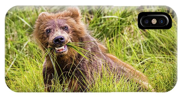 Grizzly Cub Grazing, Alaska IPhone Case