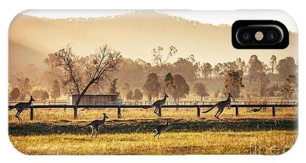 Grey Background iPhone Case - Group Of Australian Kangaroos At Hunter by Andrey Bayda