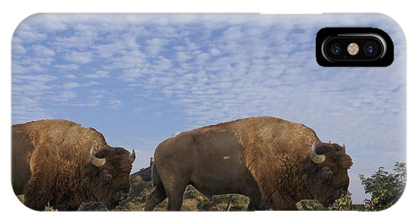 Group Of Bison Walking Against Rocky Mountains  IPhone Case