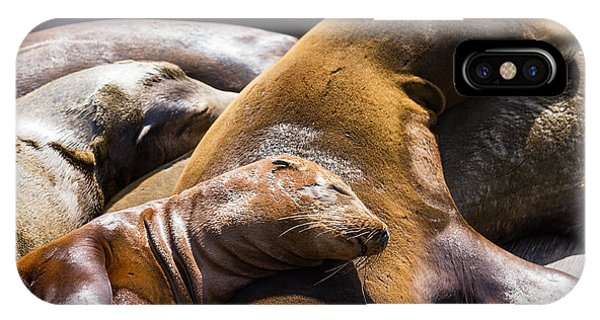 Travel Destination iPhone Case - Group Of California Sea Lions Sun by Wollertz