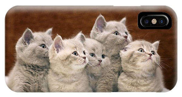 Small iPhone Case - Group Of Cute Gray British Kittens by Kichigin