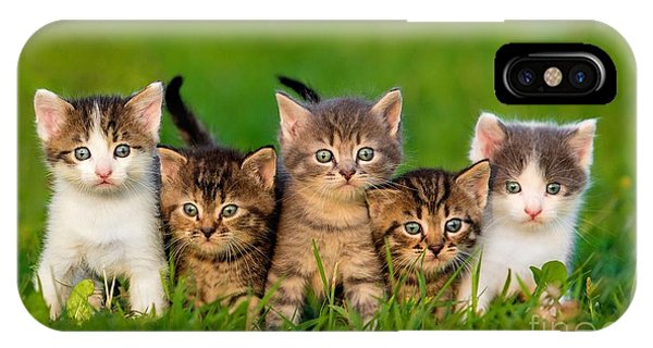 Tabby iPhone Case - Group Of Five Little Kittens Sitting On by Grigorita Ko