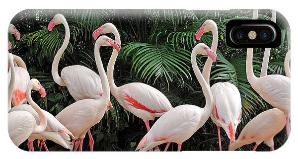 East Africa iPhone Case - Group Of Pink Flamingos by Panda3800