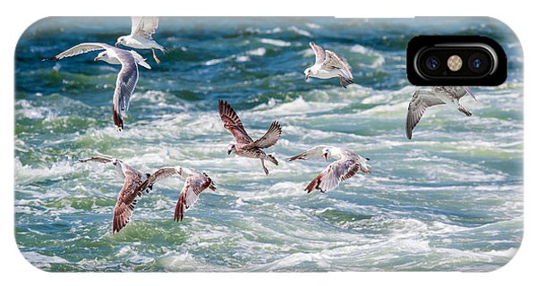 Zoology iPhone Case - Group Of Seagulls Over Sea by Muratart