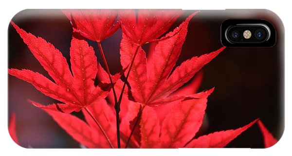 Guardsman Red Japanese Maple Leaves IPhone Case