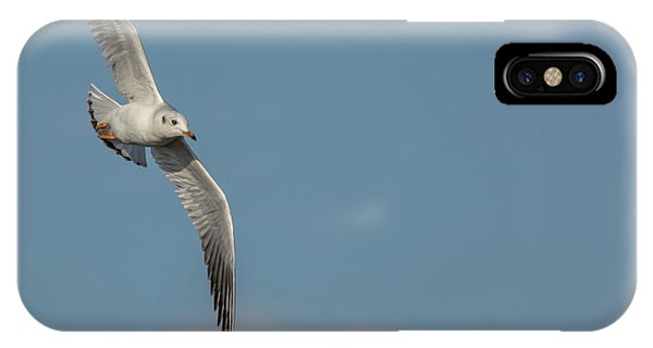 IPhone Case featuring the photograph Gull In Flight by Scott Lyons