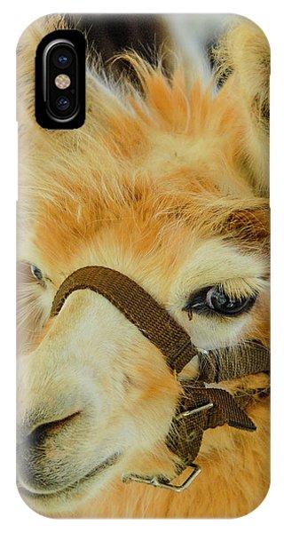 Happy Alpaca IPhone Case