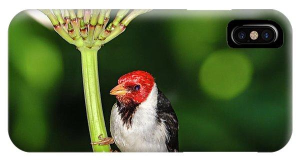 Happy Valentine's Day Bird IPhone Case