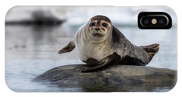 iPhone Case - Harbour Seal On A Rock In Svalbard by Jane Rix