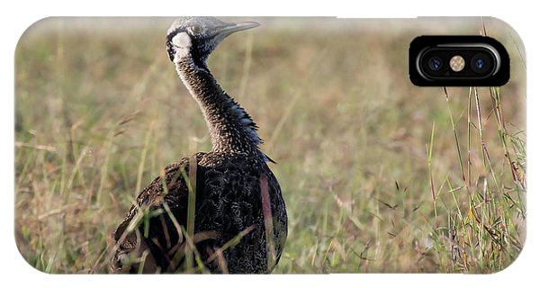 Black-bellied Bustard IPhone Case