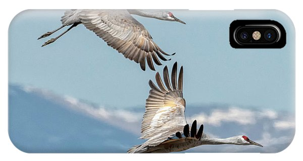 Sandhill Crane iPhone Case - Headed North by Mike Dawson