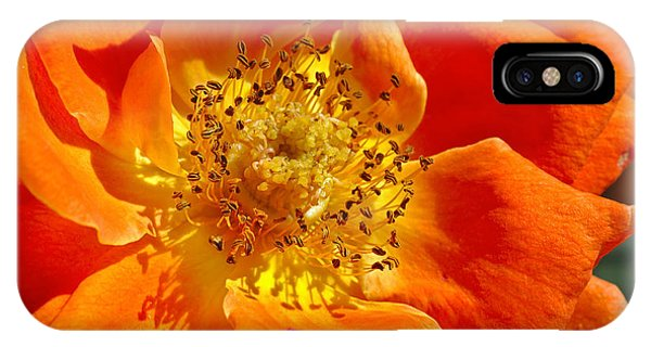 Heart Of The Orange Rose IPhone Case