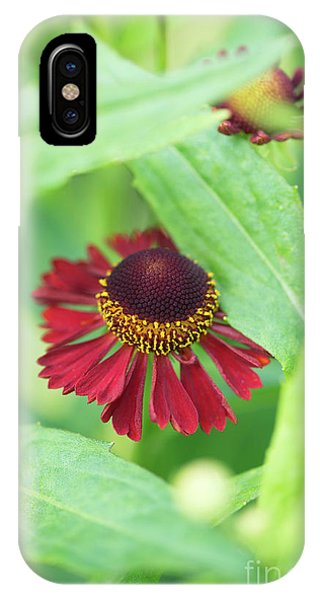 IPhone Case featuring the photograph Helenium Ruby Tuesday Flower by Tim Gainey