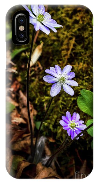iPhone Case - Hepatica In Bloom by Thomas R Fletcher