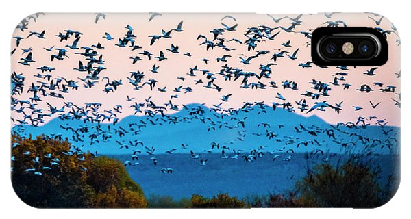 iPhone Case - Herd Of Snow Geese In Flight, Soccoro by Panoramic Images