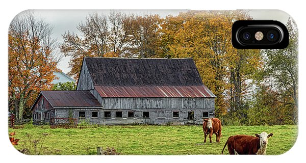 Herefords In Fall IPhone Case