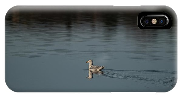 Herring Gull IPhone Case