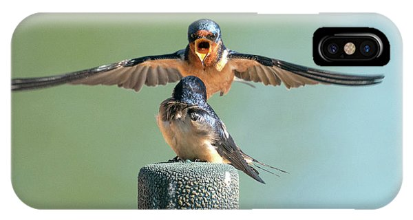 Hey, Babe, Let's Rock N Roll.  Barn Swallows IPhone Case