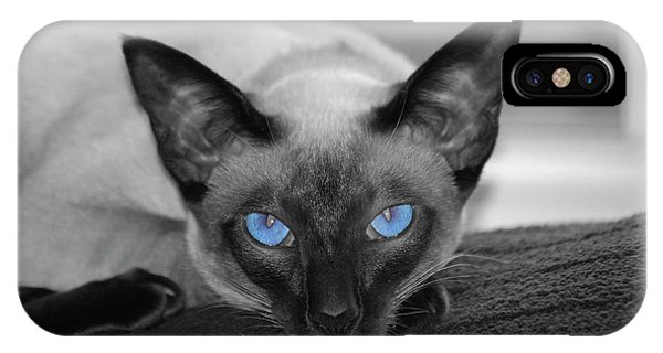 Hey There Blue Eyes - Siamese Cat IPhone Case
