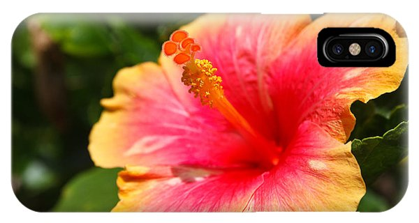Botanical Garden iPhone Case - Hibiscus Flower Pollen by Photonewman