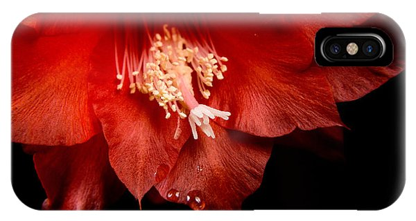 Cacti iPhone Case - High-quality Macro Photography Red by Bystrov