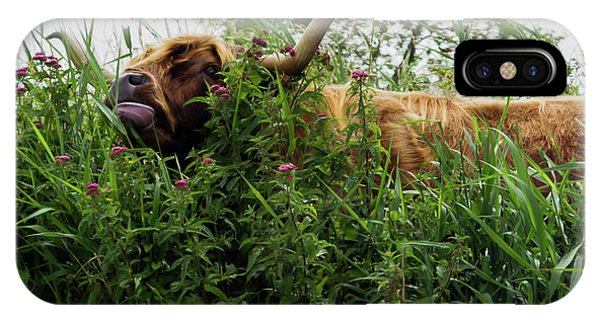 IPhone Case featuring the photograph Highland Cow In Tall Grass by Scott Lyons